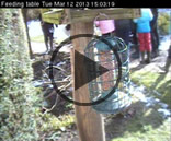 View our live web cam button
